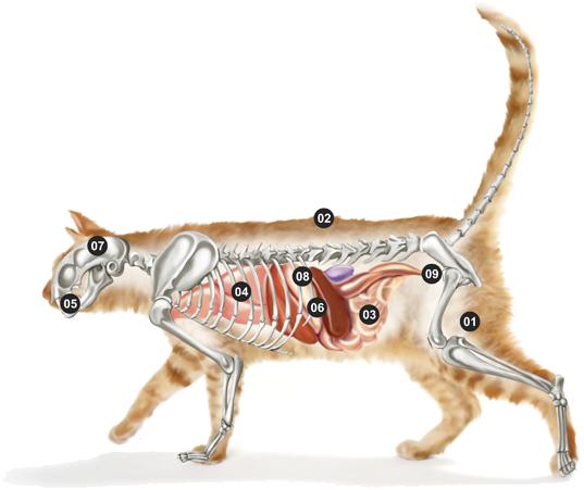 Micho Adult Cat
